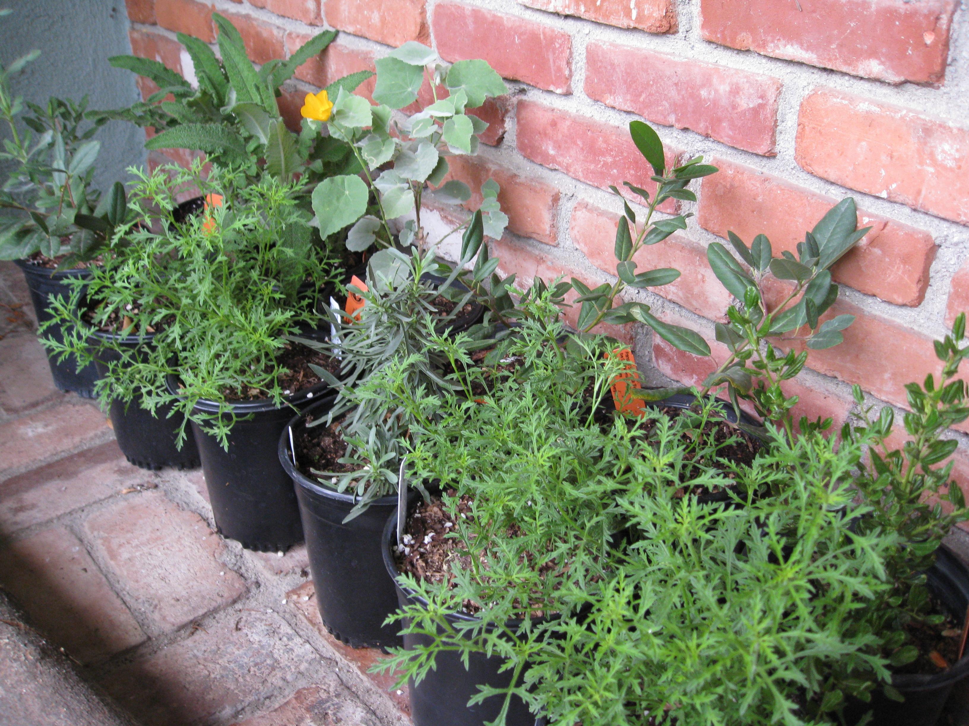 Fall Time To Plant Perennials Gardenerd